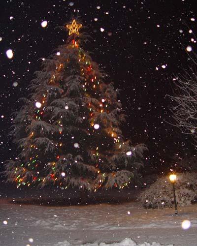 L'albero di Natale nell'Ashram
